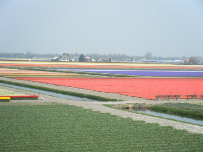 A vibrant rainbow of tulips.